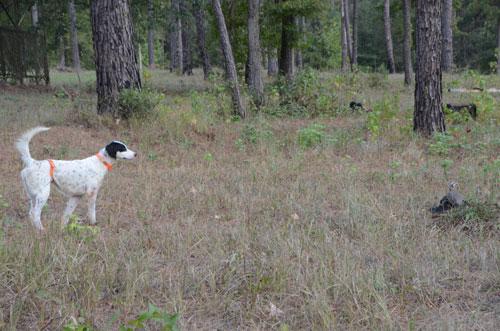 dog-hunting